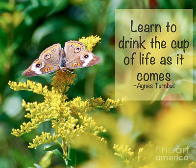 Photograph - Life Lesson - As It Comes by Kerri Farley