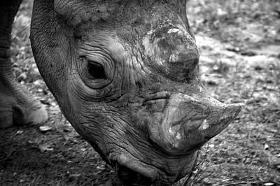 Life Lines Rhino Art Print by Thomas Woolworth