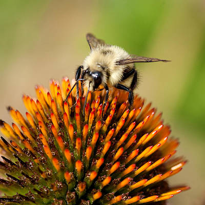 Photograph - Life Of A Bee by Jack Bell
