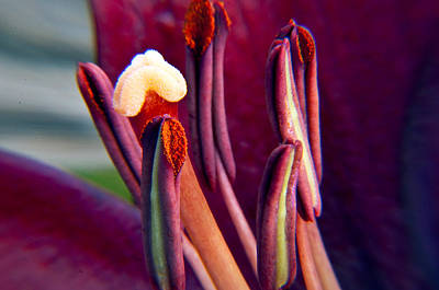 Photograph - Life Of A Lily by Eric Rundle