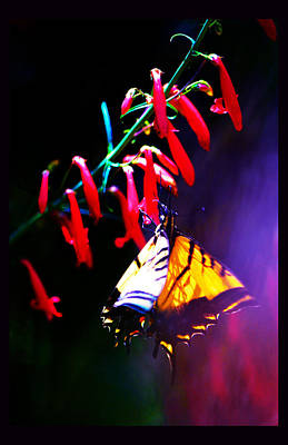 Life Of Butterfly Print by Susanne Still