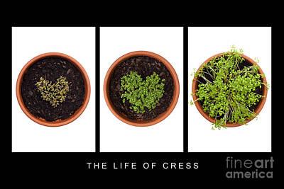 Life Of Cress Art Print