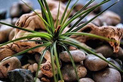 Photograph - Life Of The Rocks by Diana Mary Sharpton