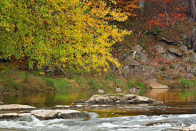 Maple Trees Photograph - Life On The River by Bill Wakeley