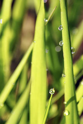 Photograph - Life Through A Drop by Jason Politte