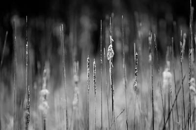 Photograph - Life's Ripple by Steven Santamour