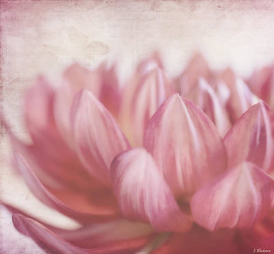 Photograph - Lift Your Spirit - Vintage Flower Art by Jordan Blackstone
