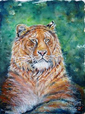 Liger Art Print by Zaira Dzhaubaeva
