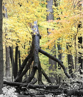 Autumn Photograph - Light And Dark In The Forest by Rosanne Jordan