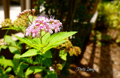 Photograph - Light And Shadow by Debbie Sikes