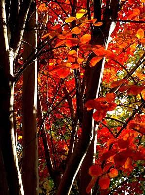 Photograph - Light And Tree by Gina  Zhidov