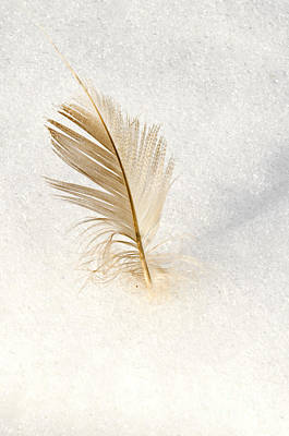 Photograph - Light As A Feather by Dee Cresswell