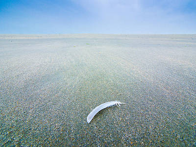 Photograph - Light As A Feather by Martin Liebermann