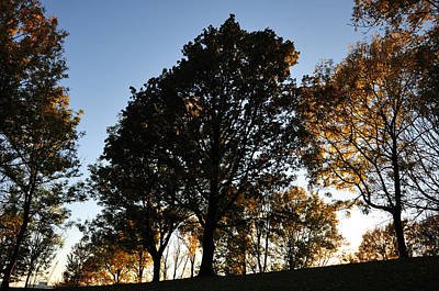 Photograph - Light Behind The Trees by Randi Grace Nilsberg
