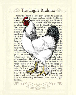 Breed Digital Art - Light Brahma Rooster by Antique Images