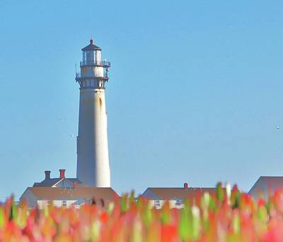 Photograph - Light House Iceplant by John King