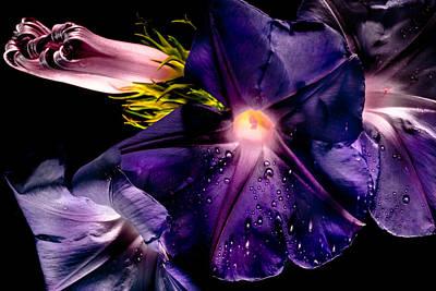 Photograph - Light In Purple by Edgar Laureano