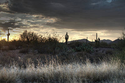 Photograph - Light In The Desert by Tam Ryan