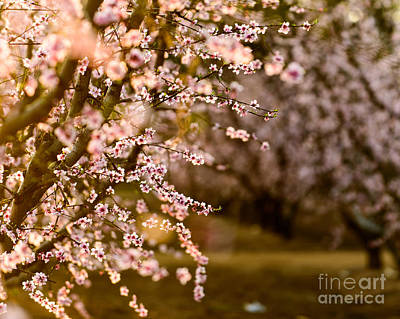 Photograph - Light In The Orchard by Terry Garvin