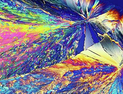 Biochemistry Photograph - Light Micrograph Of Citric Acid Crystals by Alfred Pasieka