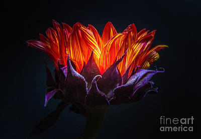 Light My Fire Photograph - Light My Fire by Mitch Shindelbower