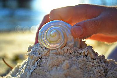 Beach Shell Sand Sea Ocean Photograph - Light Of Creation by Laura Fasulo