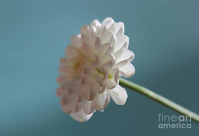White Flower Photograph - Light Of My Life by Krissy Katsimbras