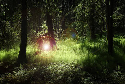 Photograph - Light Of The Forest by Dreamland Media
