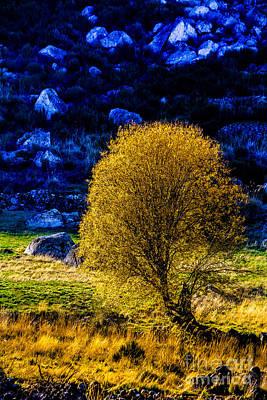 Photograph - Light Of Winter by Edgar Laureano