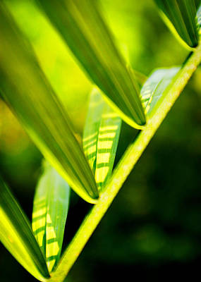 Photograph - Light On Leaves by Val Stone Creager