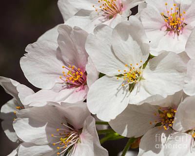 Photograph - Light Pink Blossoms-3 by Dale Nelson