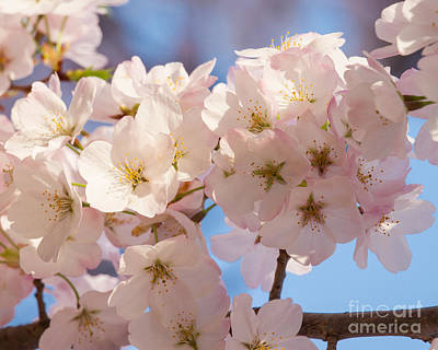 Photograph - Light Pink Blossoms by Dale Nelson