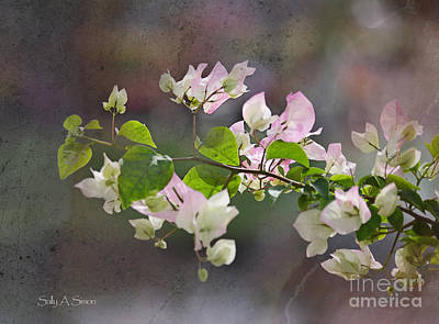 Photograph - Light Pink Bougainvillea by Sally Simon