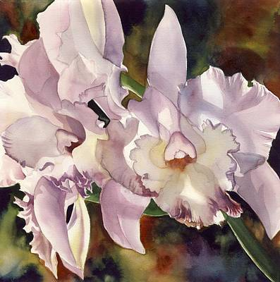 Light Pink Cattleya Orchid Original by Alfred Ng