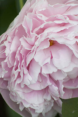 Flower Photograph - Light Pink Flower by Gary Marx