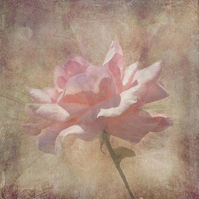 Light Pink Grunge Rose Art Print by Rosalie Scanlon