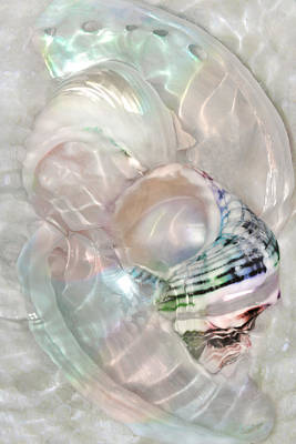 Photograph - Light Play On Mother Of Pearl by Leda Robertson