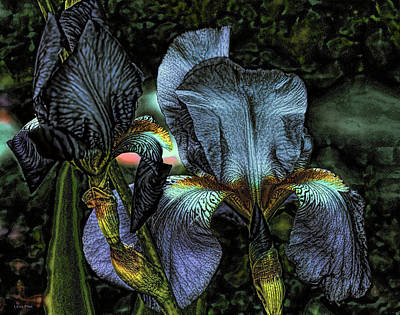 Photograph - Light Purple Beauties Iris by Lesa Fine