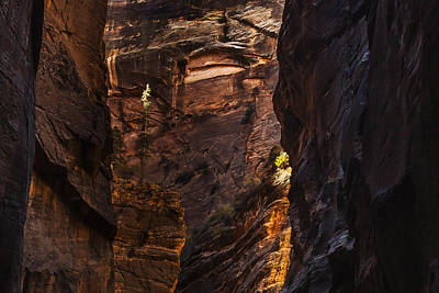 Canyon Photograph - Light Standing Tall by Andrew Soundarajan