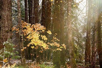 Light The Forest Art Print by Ramona Murdock