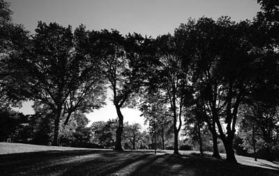 Photograph - Light Through The Trees by Eric Tressler
