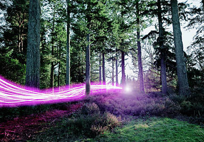 Freedom Photograph - Light Trails Passing Through Woods by Robert Decelis Ltd