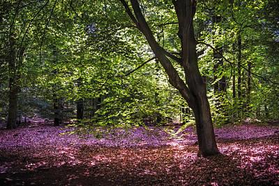 Light Tree In Hoge Veluwe National Park. Netherlands Print by Jenny Rainbow