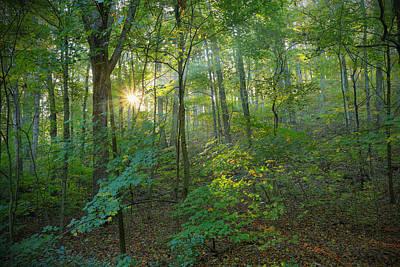 Light Up The Forest Art Print