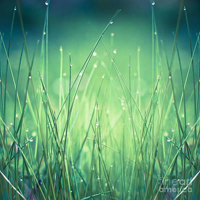 Licht Wall Art - Photograph - Light - Water And Grass by Dirk Wuestenhagen