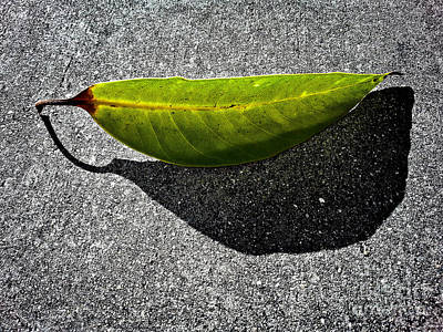 Photograph - Lighted Leaf by Fei Alexander