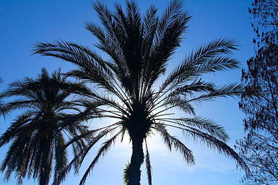 Photograph - Lighted Palm by Denise Mazzocco