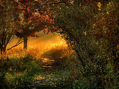 Lighted Path Art Print