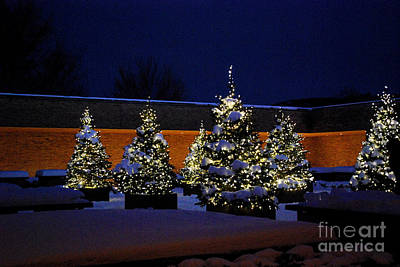 Botanic Photograph - Lighted Trees With Snow by Nancy Mueller