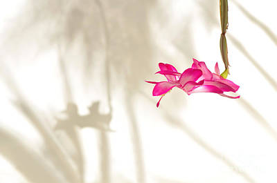 Light..flower..shadow 2 Art Print by Kaye Menner